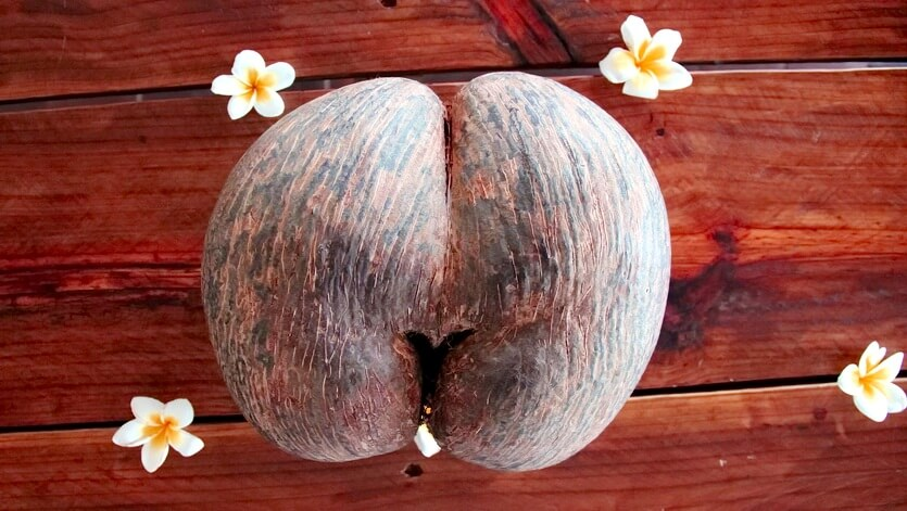коко-де-мер сейшелы