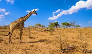 ботсвана сафари