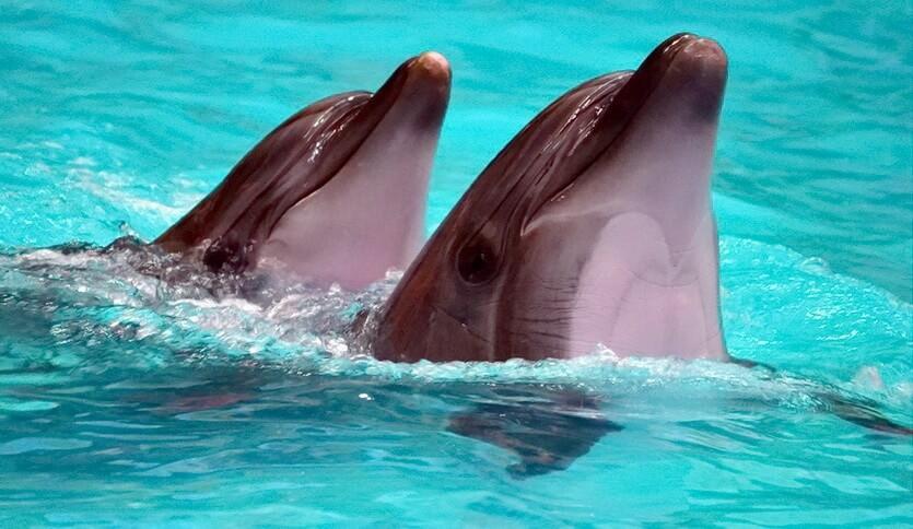 дельфины геленджик