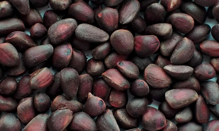 кедровые орехи красноярск