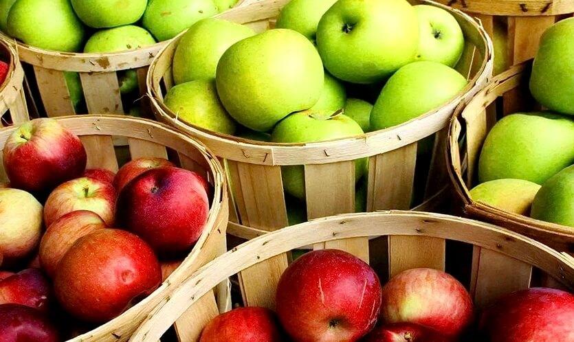 мичуринские яблоки тамбов