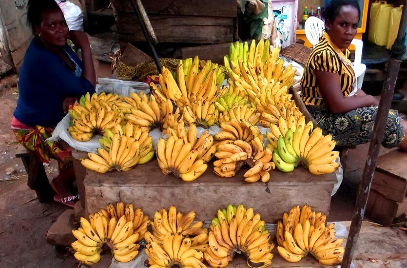 бананы в уганде