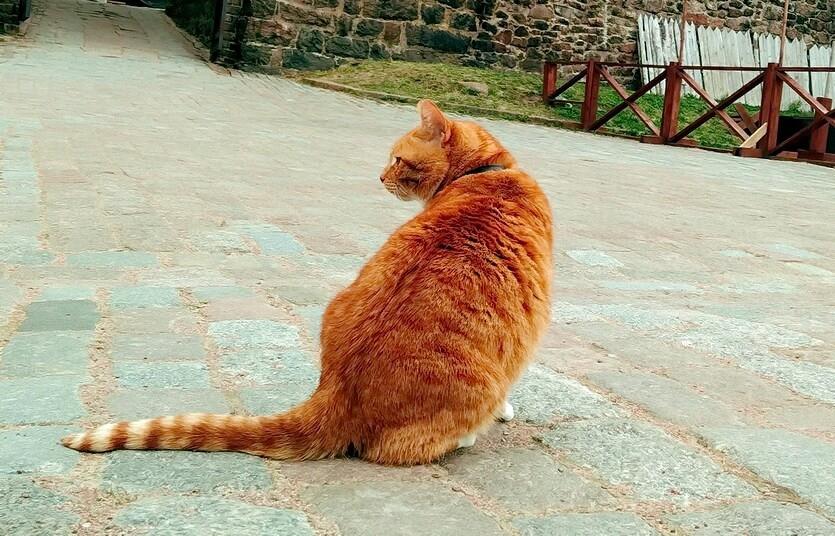 выборг кот филимон