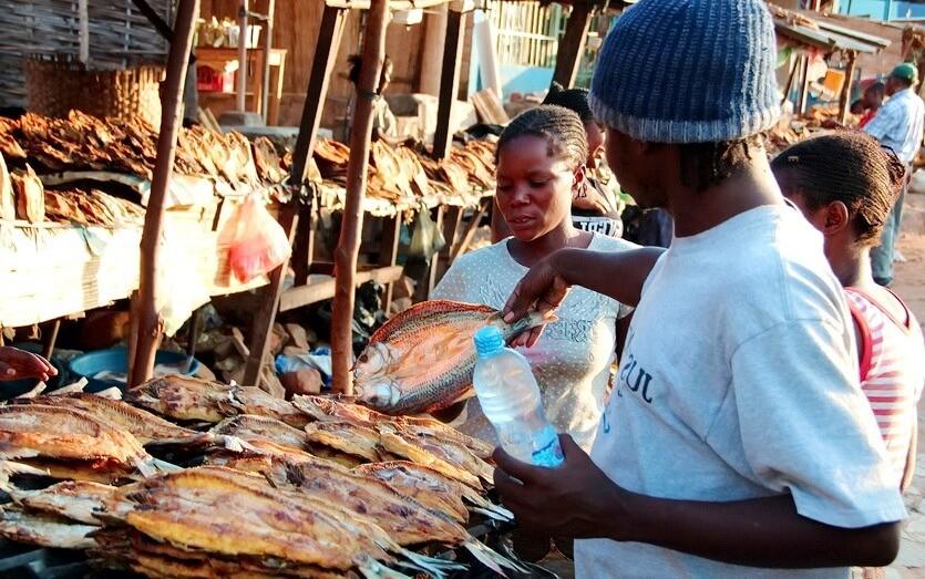 шоппинг в замбии рыба