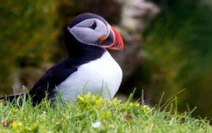 фарерские острова тупик