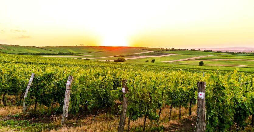 моравия виноградники