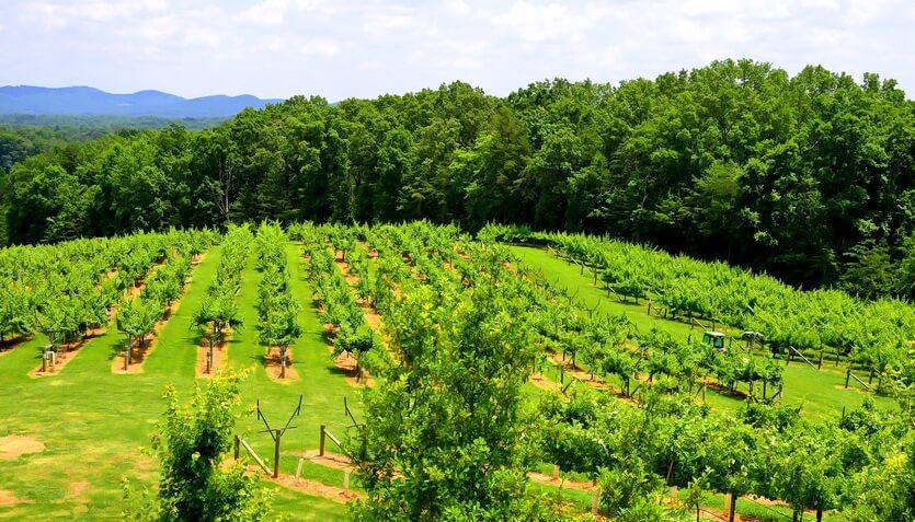 виноделие в грузии