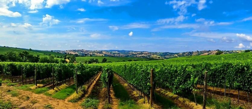 тоскана виноградники италия