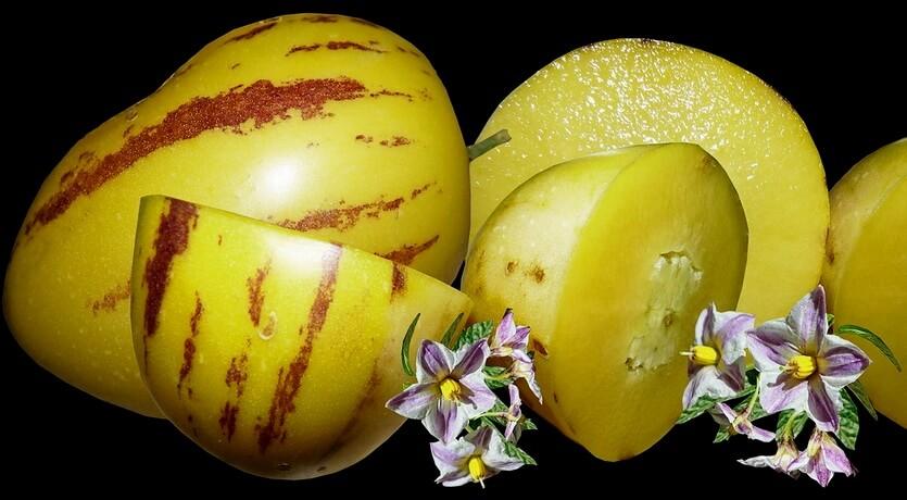 пепино кнр фрукт