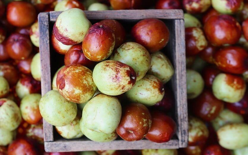 зизифус фрукты крыма