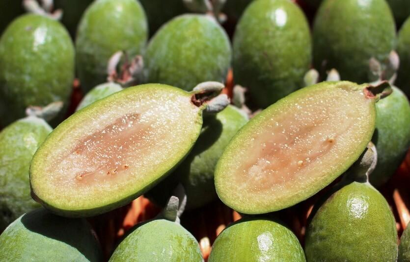 фейхоа фрукт в абхазии