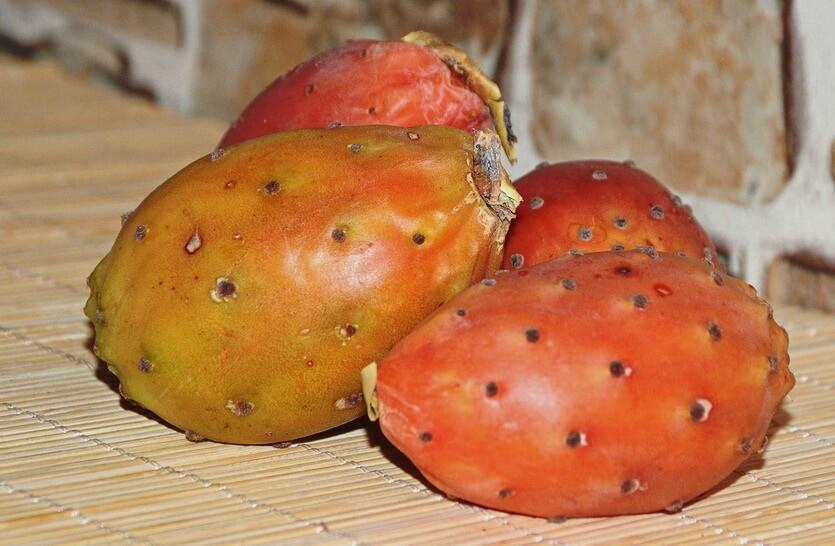 кактус опунция крымский фрукт
