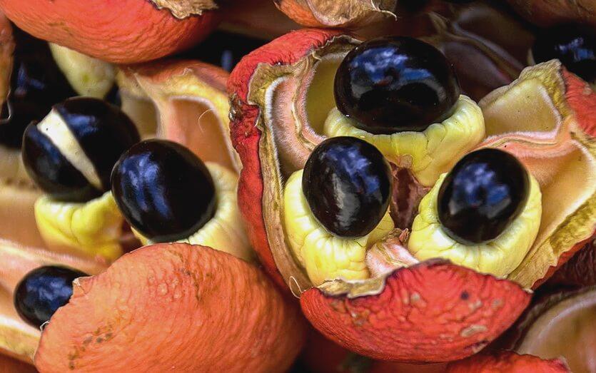 аки фрукты доминиканы