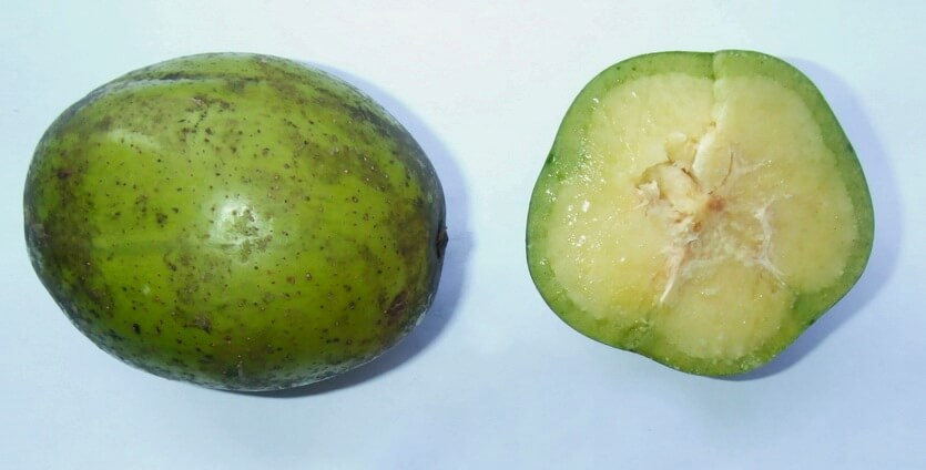 амбарелла карибский фрукт
