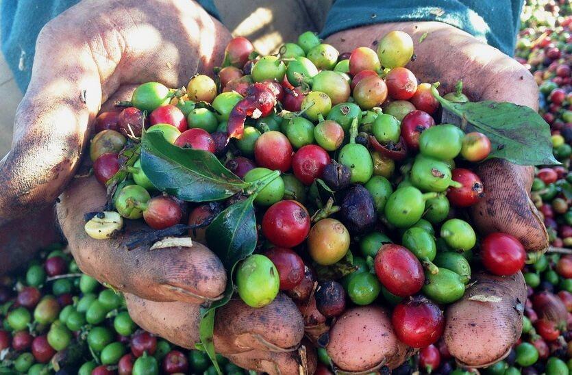 бразильский кофе зерна