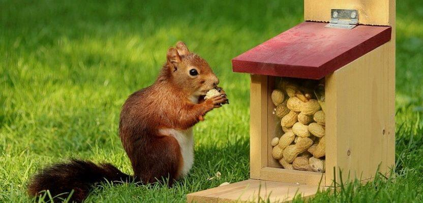 арахис сколько есть