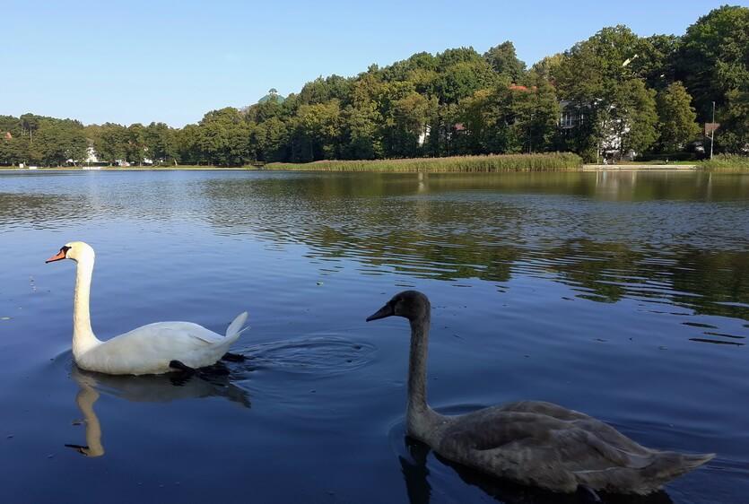 озеро тихое светлогорск